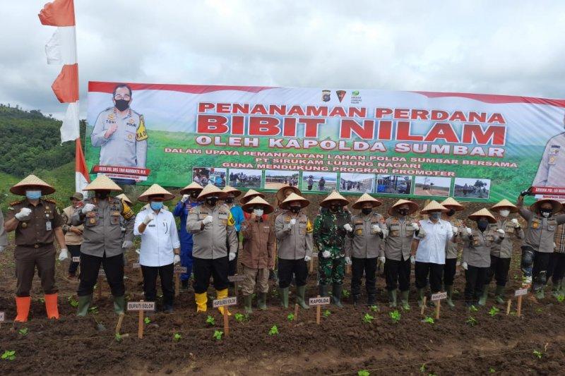 Kapolda Sumbar tanam bibit nilam di Nagari Supayang, Kabupaten Solok
