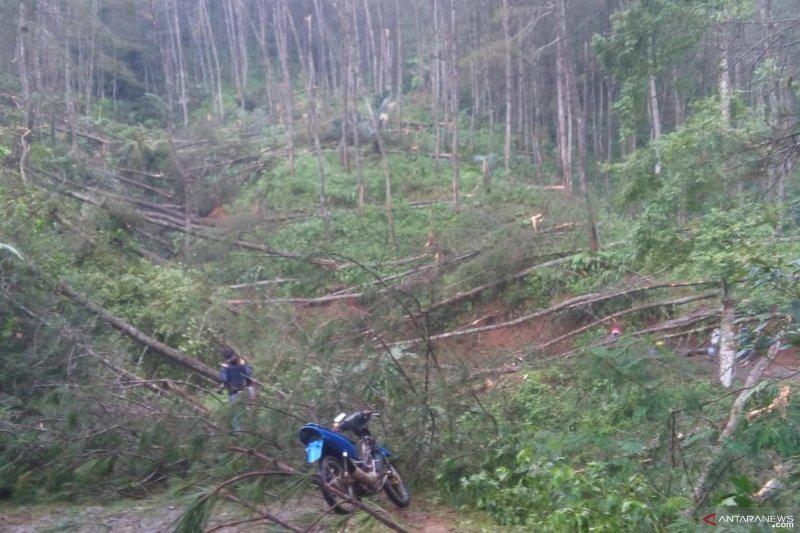 Tiga desa di Cianjur terisolir akibat puluhan pohon tumbang