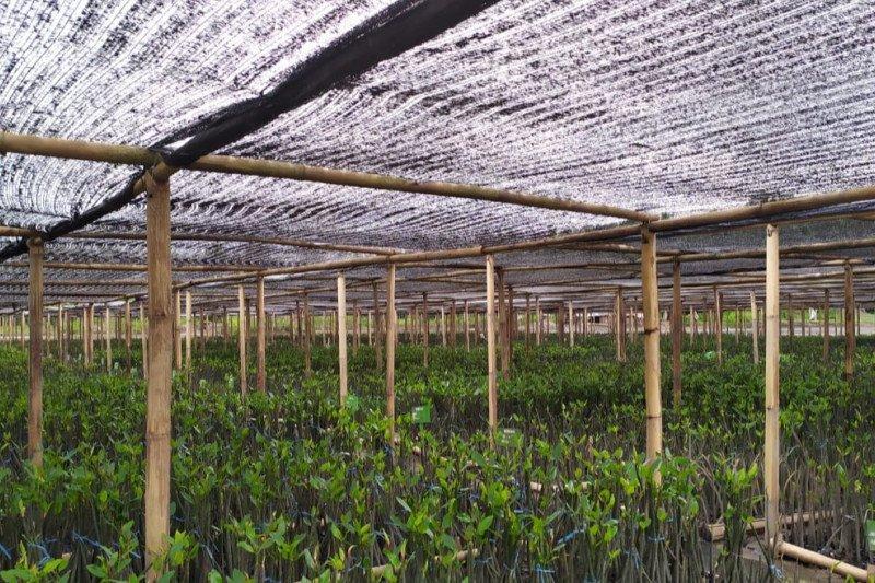 KKP memberdayakan Kelompok Sadar Wisata Lombok bibitkan 500 ribu mangrove