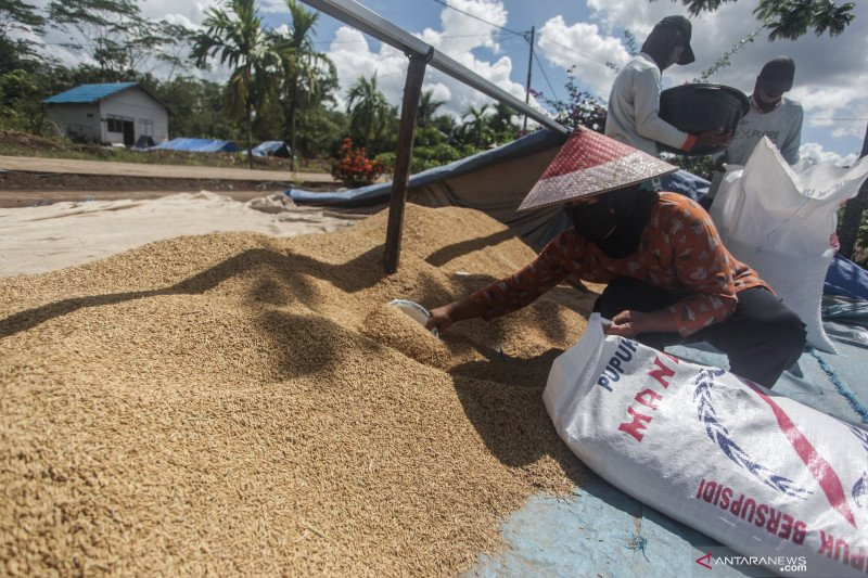 Pemkab Sukamara dorong masyarakat optimalkan sektor pertanian