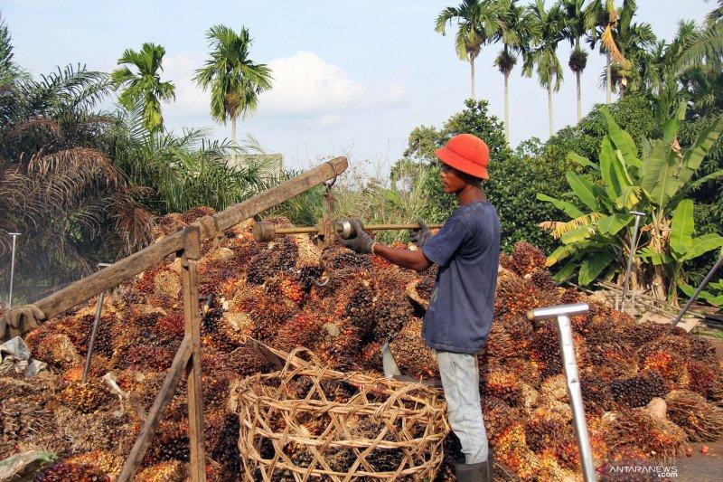 "Akademisi: Label ""no palm oil"" bagian  kampanye hitam sawit"