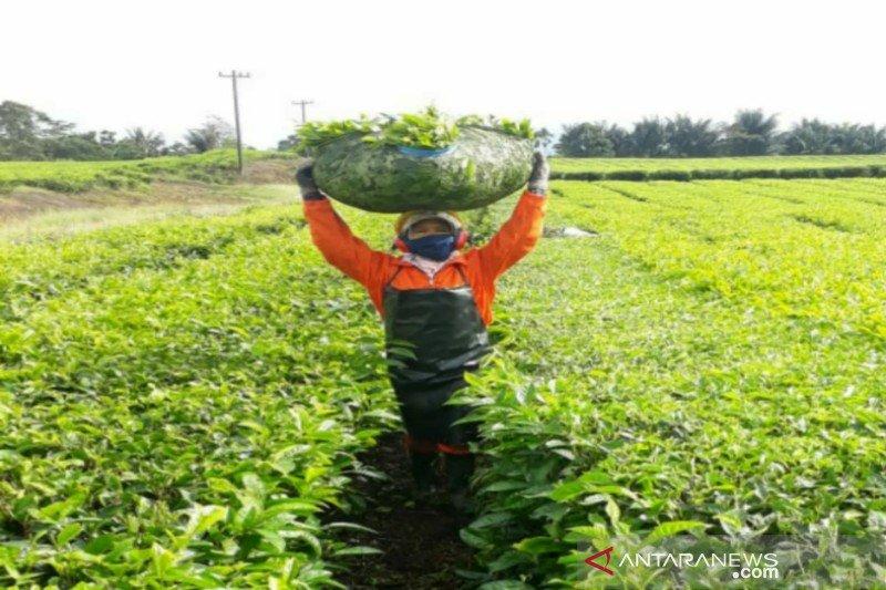 Pakar : Hilirisasi pertanian solusi pulihkan ekonomi Sumbar