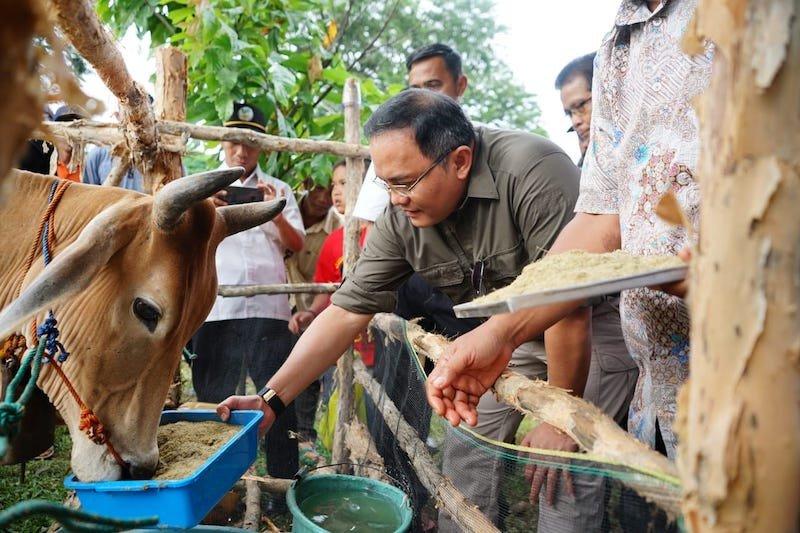 Musi Banyuasin targetkan peningkatan populasi  sapi 60.000 ekor 2023