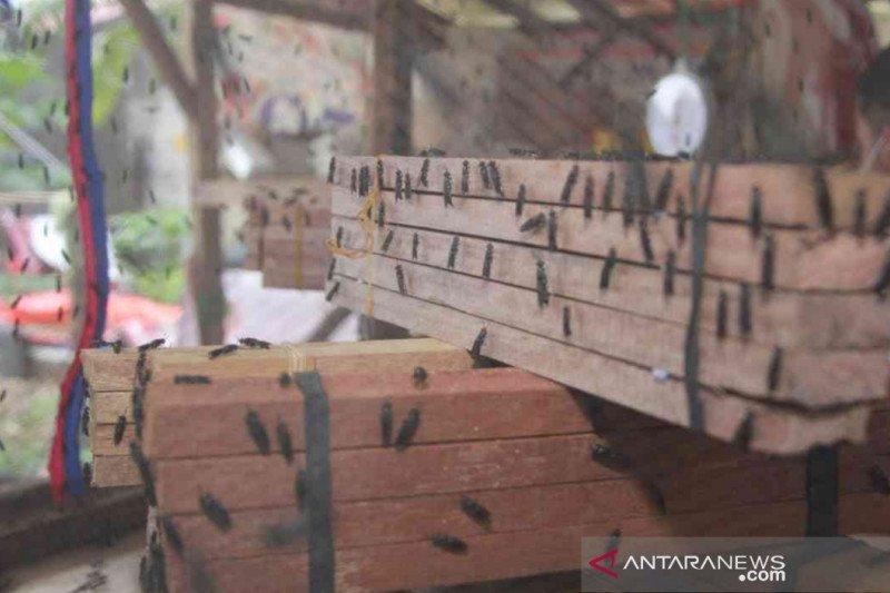 Petani maggot di Bekasi raup omzet Rp12 juta sebulan
