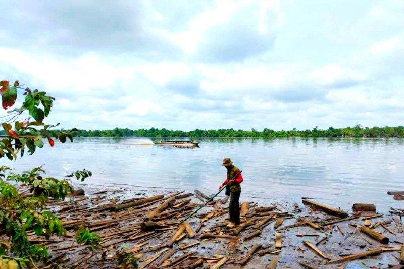 BKSDA telusuri kemunculan buaya Sungai Mentaya