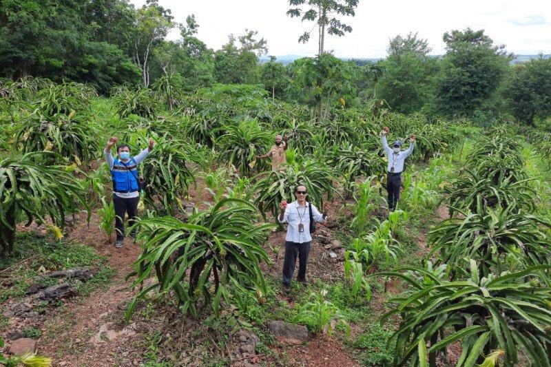PLN pasok listrik untuk tingkatkan produksi petani buah di TTU