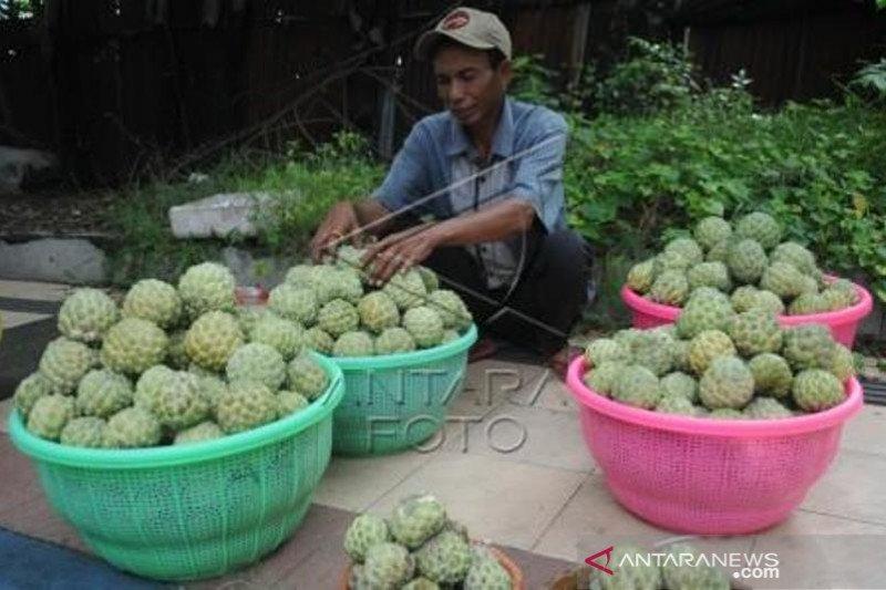 Penjualan Buah Srikaya