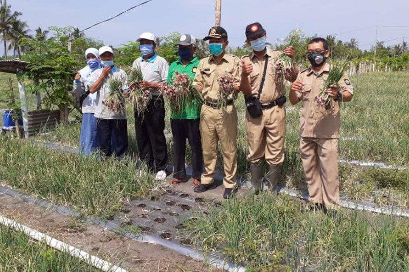Kelompok Petani Kulon Progo panen bawang merah di lahan pasir