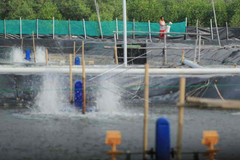 183 hektare lahan budi daya perikanan terdampak banjir Indramayu ditanggung asuransi