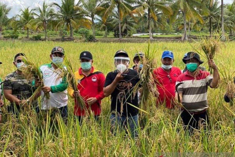 Buol genjot produksi pangan pertanian  sambut perpindahan ibu kota