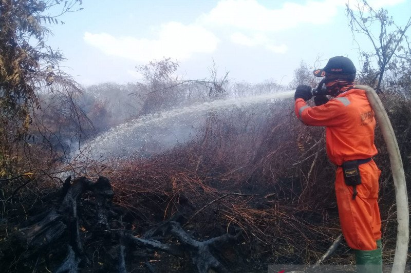 Kebakaran lahan sawit di Tiku Agam meluas jadi 6,5 hektare