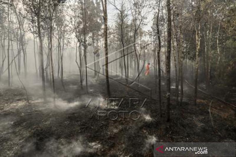 Kebakaran Hutan Di Kawasan Bandara Hang Nadim