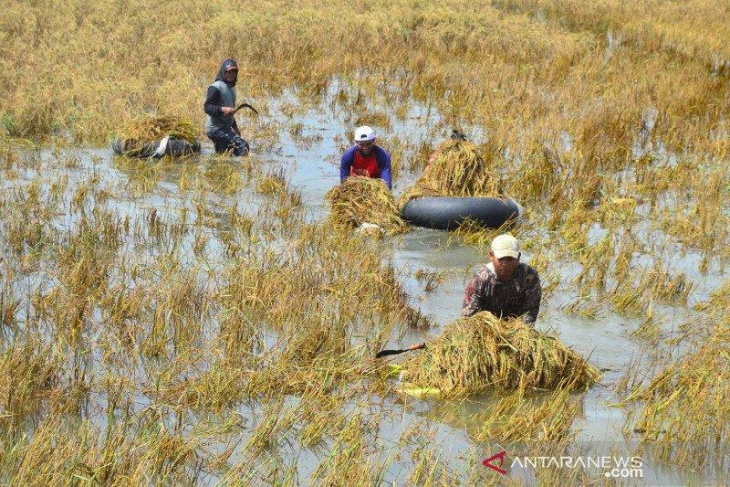 Kementan antisipasi gagal panen akibat bencana dan curah hujan tinggi