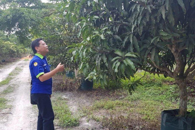 Pakar pertanian:  Kendalikan hama dengan tanaman refugia