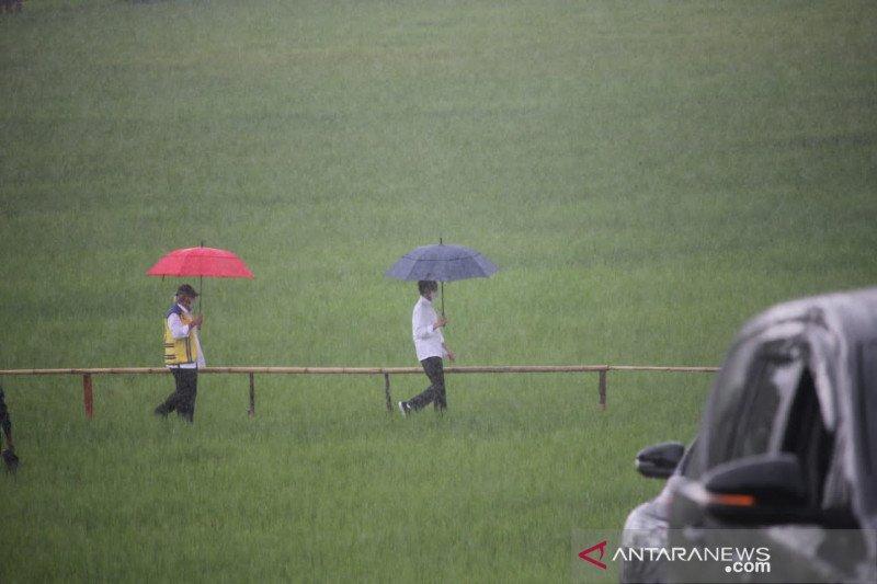 Pengamat optimistis Indonesia mampu swasembada beras