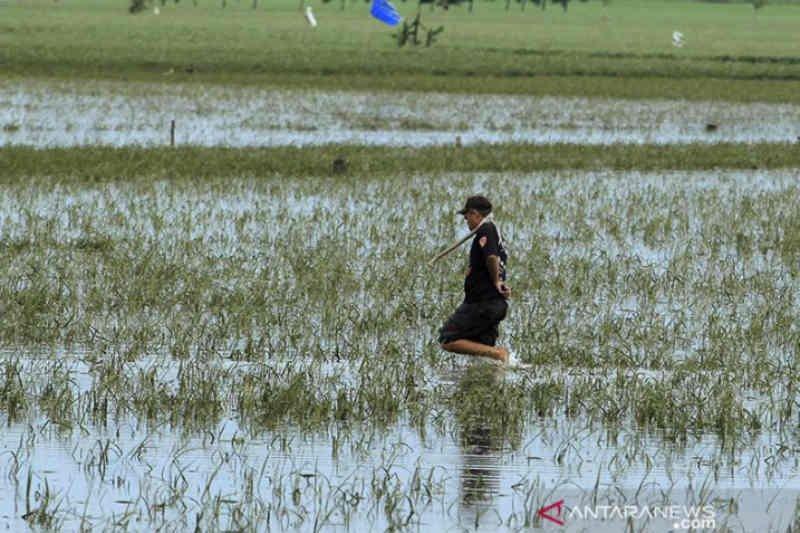 Pemkab Cirebon bantu bayar premi asuransi bagi para petani