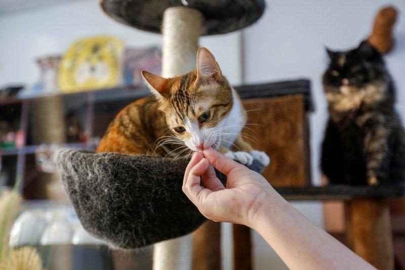 Kafe kucing di Dubai untuk lepas stres