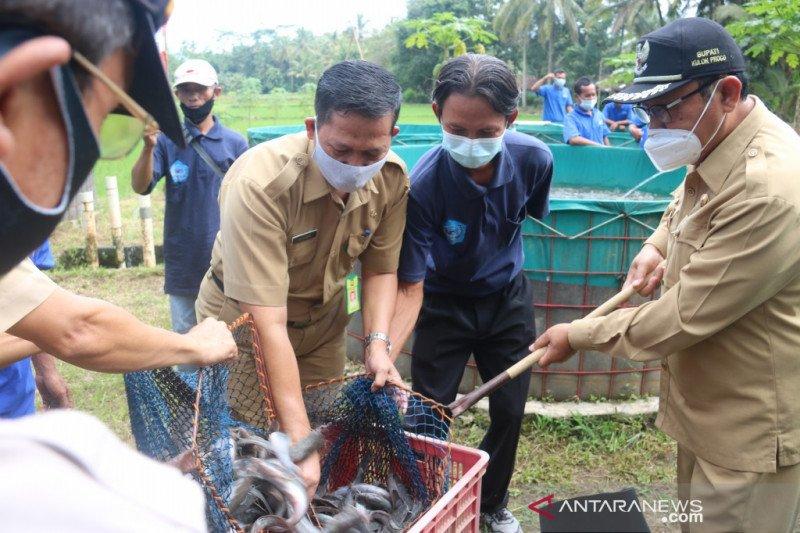 DKP Kulon Progo berikan bantuan sarana produksi kepada 60 pokdakan