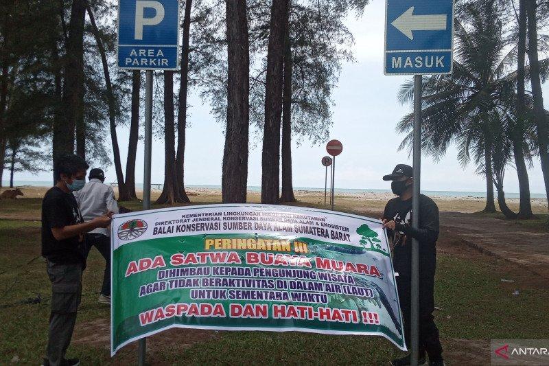 Seekor buaya muara di Pantai Tiku Agam bergeser ke Padang Pariaman
