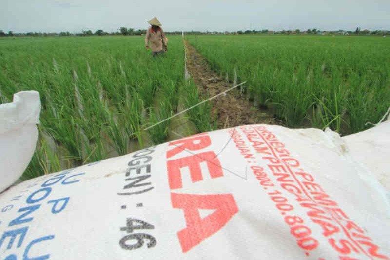 Kebutuhan pupuk subsidi di Cirebon membengkak