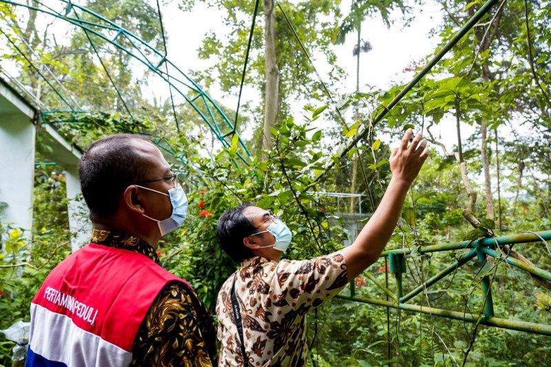Pertamina dukung program konservasi kupu-kupu langka di Lampung