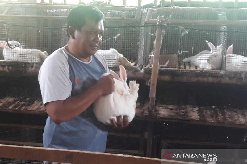 Permintaan bibit kelinci meningkat  saat pandemi