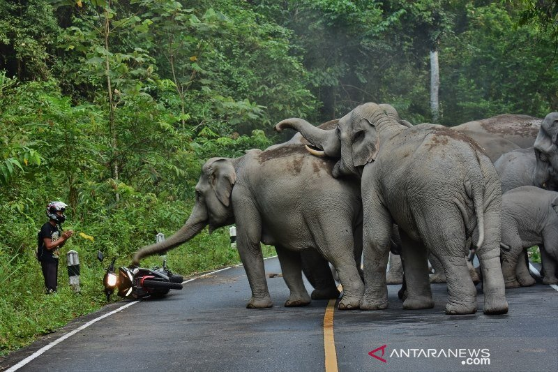 JBI dorong Pemerintah OKU Selatan  siapkan area konservasi gajah