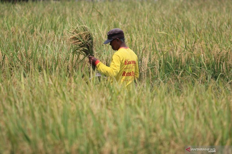 Kementan terus berupaya jaga produksi dan kesejahteraan petani