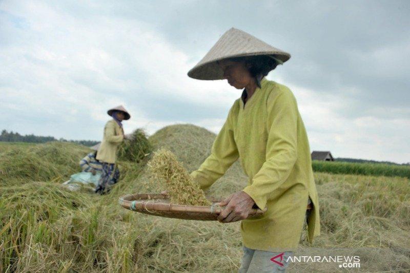 Bulog Sumsel serap 12.000 ton  beras petani