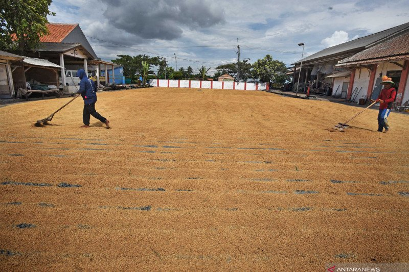 Petani Sumsel unjuk rasa desak Bulog serap  hasil panen