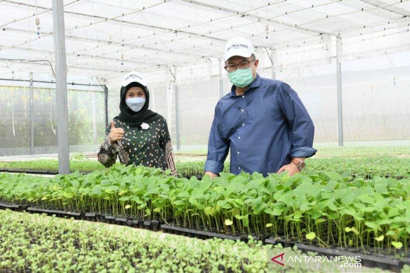 Desy Ratnasari kunjungi taman teknologi agribisnis di kampus IPB University