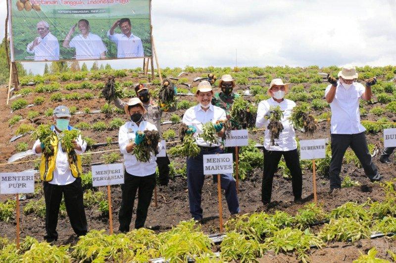 Luhut Panjaitan panen kentang di Kabupaten Humbang Hasundutan Sumut