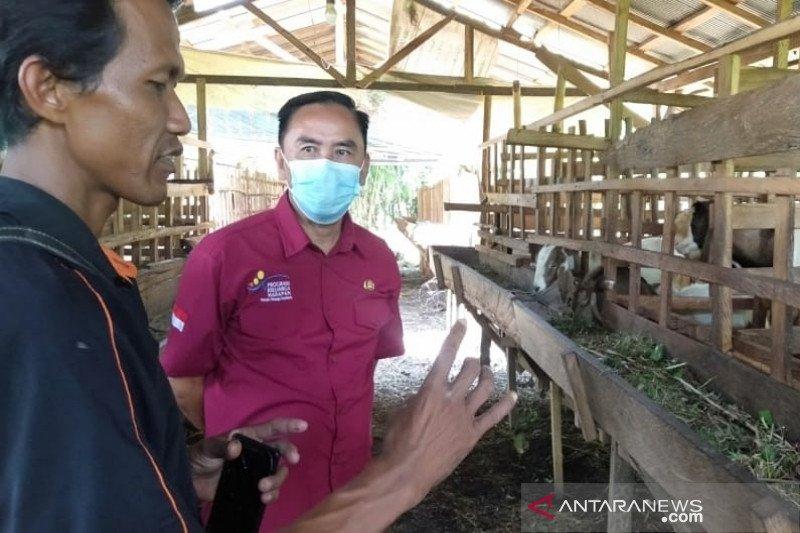 Desa Gandang berhasil kembangkan ternak kambing melalui usaha kelompok