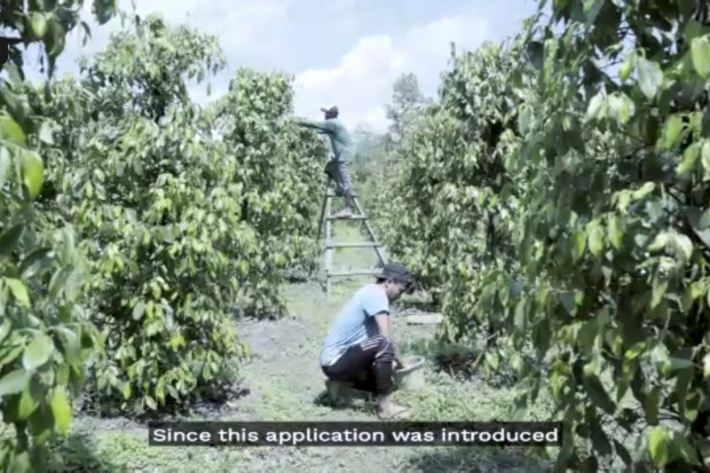 """Bagi petani lada, gunakan aplikasi geodata """"SpiceUp"""" untuk dongkrak daya saing"""