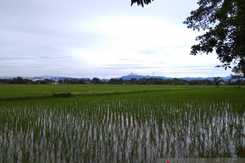 Bulog: Stok beras Sulselbar melimpah hingga 43 bulan ke depan