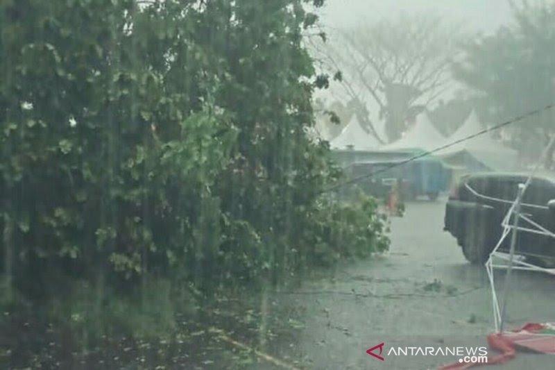 Belasan pohon di Bantul tumbang terdampak hujan lebat disertai angin kencang