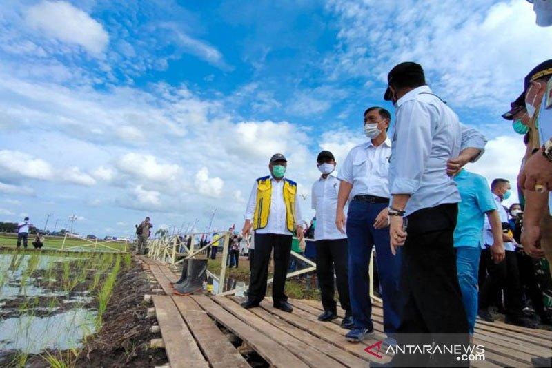 Menko Marves:Presiden berpesan food estate Kalteng harus jalan