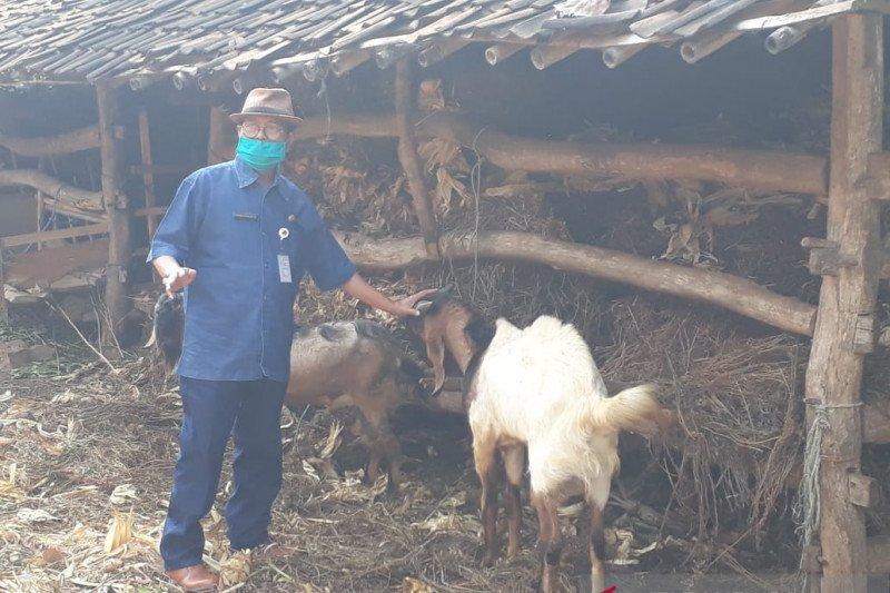 Gunung Kidul membangun damparit Playen dukung ketersediaan pakan ternak