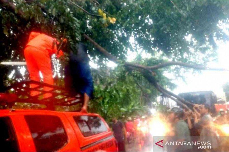Hujan deras dan angin kencang di Bekasi akibatkan banjir dan pohon tumbang