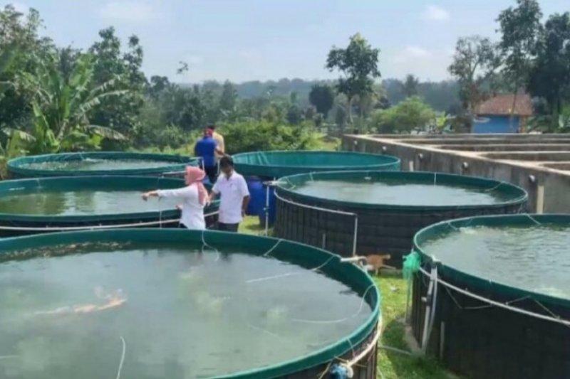 Petani milenial pembudidaya ikan raih diproyeksikan raih untung Rp4,42 juta/bulan