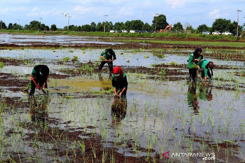 Program pemberdayaan petani di Seruyan perlu ditingkatkan