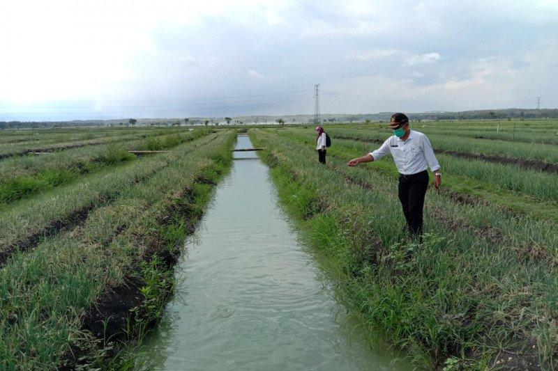 Kulon Progo mendukung petani Srikayangan kembangkan mina bawang