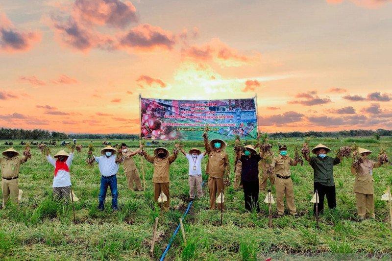 Pemkab Kulon Progo mengoptimalkan sektor pertanian untuk pemulihan ekonomi