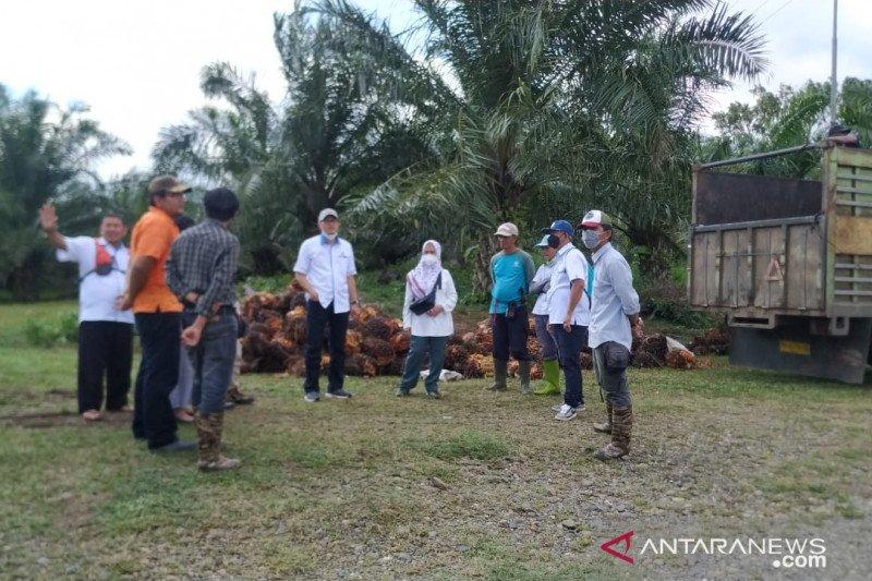 Produksi sawit PTPN XIV alami tren positif