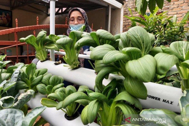 Usulan  dana pokir DPRD Padang bidang pertanian meningkat  tajam