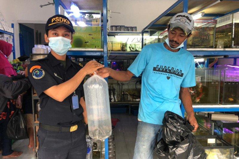 """KKP amankan sebanyak 24 """"ikan bajak laut"""" di Tarakan Kaltara"""