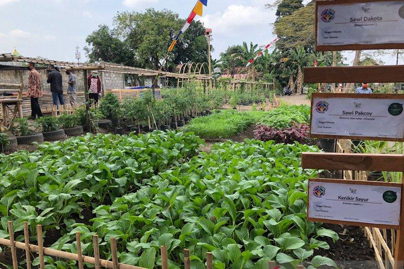 Pengembangan Food estate Yogyakarta dioptimalkan penanganan stunting hingga wisata
