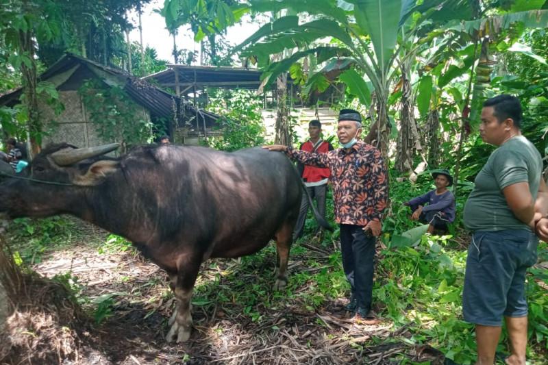 Untuk persiapan Idul Fitri. pasar ternak di Padang Pariaman mulai ramai pembeli