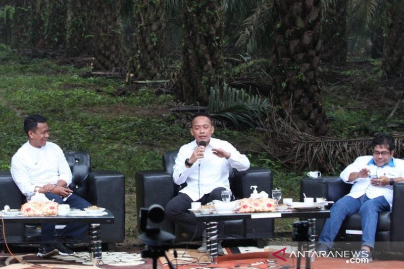 Kiat PTPN V membangun kebun dengan produktivitas sawit muda tertinggi di Indonesia