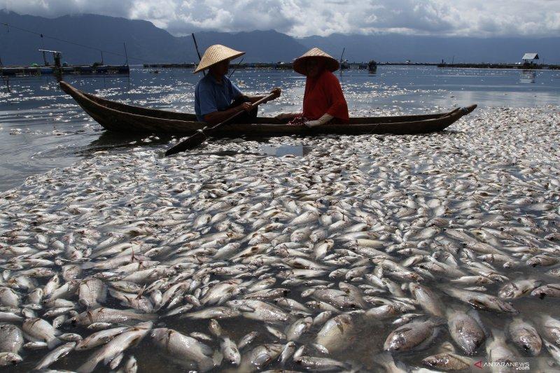 Oksigen berkurang, 6 ton ikan di Danau Maninjau mati